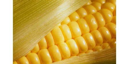 Получение крахмала из кукурузы