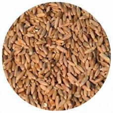 Зерно рожь для проращивания, БИО, 1 кг.