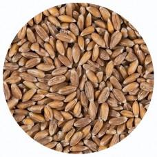 Зерно спельта, БИО, 25 кг.